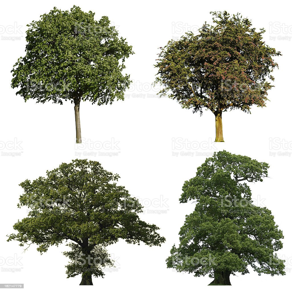 Four trees royalty-free stock photo