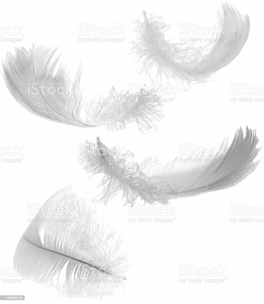 four white feathers stock photo
