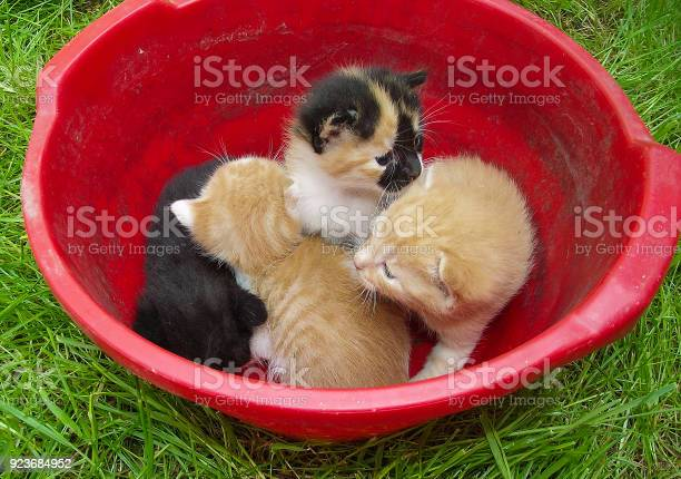 Four young cats in a plastic bucket picture id923684952?b=1&k=6&m=923684952&s=612x612&h=es9z k7 rjwznxrehj20m7niwnzumtto6r0a9l5ibe0=