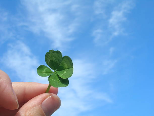 Four-leaf clover held against a sky background stock photo