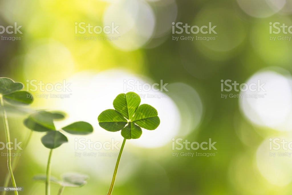Trevo de quatro folhas na sombra - foto de acervo