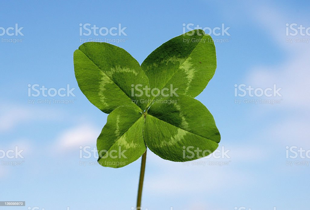 Four-leaf clover royalty-free stock photo