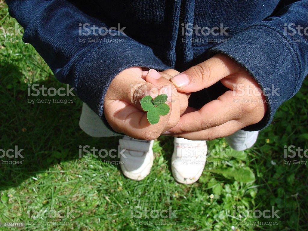 Four-leaf clover stock photo
