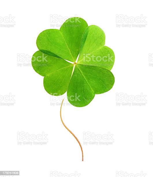Fourleaf green clover picture id179251806?b=1&k=6&m=179251806&s=612x612&h=qni1kp8oy zm4veysbgemdni7ijjdixq6bgdrirntjw=