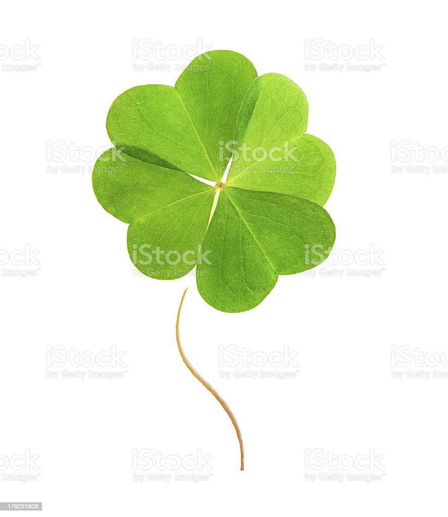 Four-leaf green clover. stock photo
