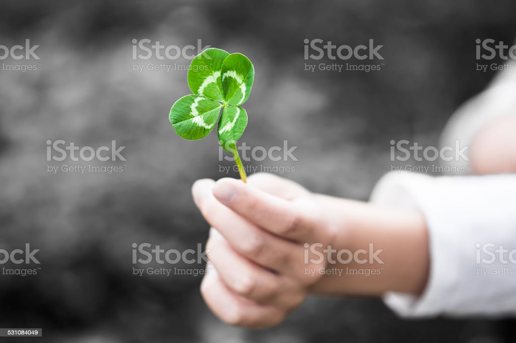 Four-Leaved Clover in a Child Hand stock photo