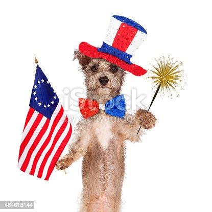 489224301 istock photo Fourth of July Celebration Dog 464618144