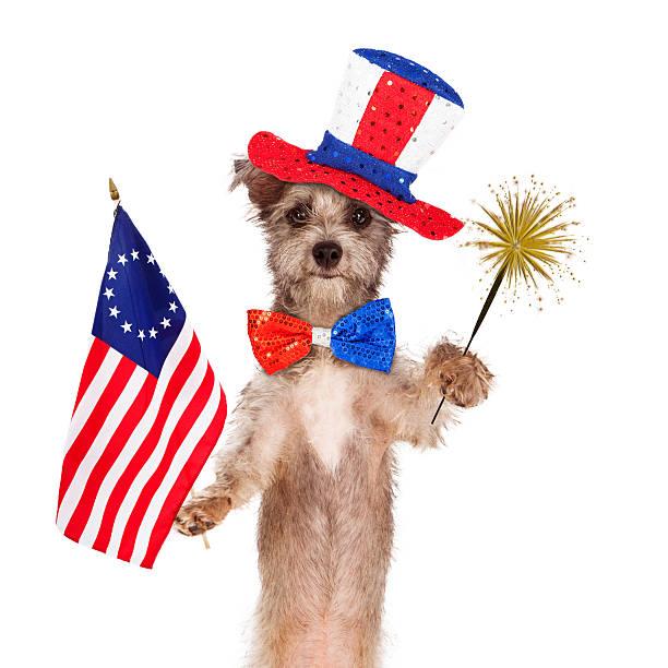Fourth of July Celebration Dog stock photo