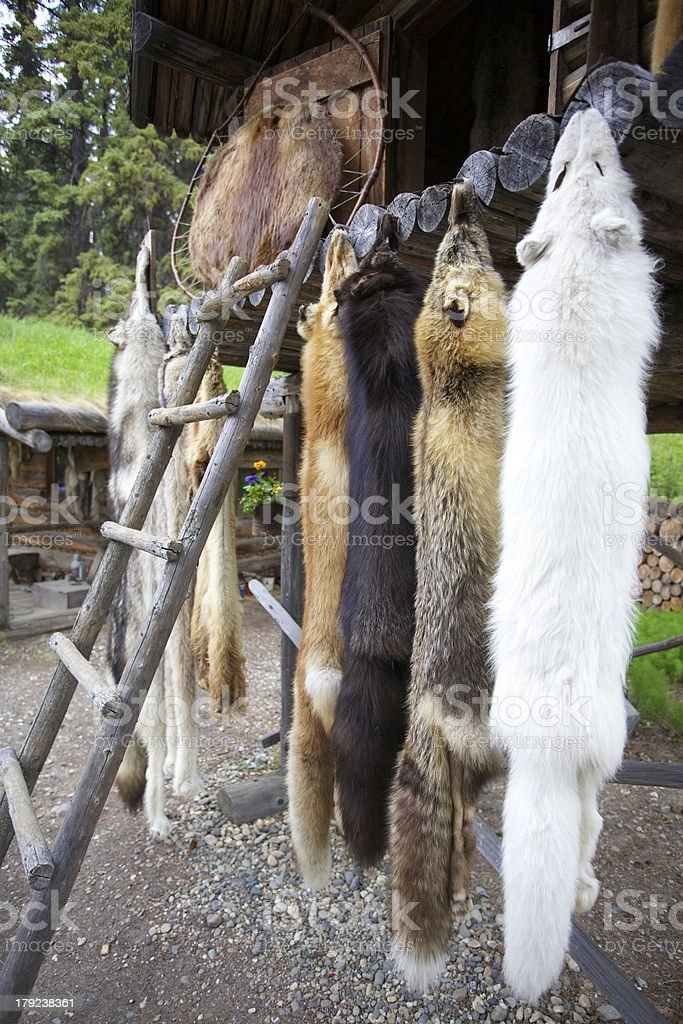 Fox and wolf pelts stock photo