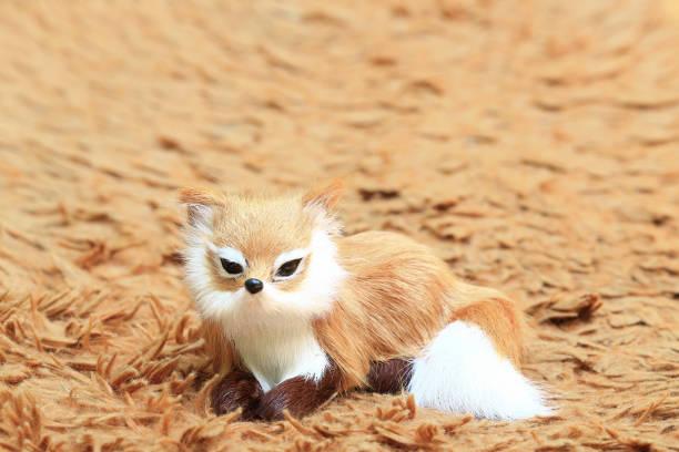 a fox at the carpet. - fuchs kissen stock-fotos und bilder