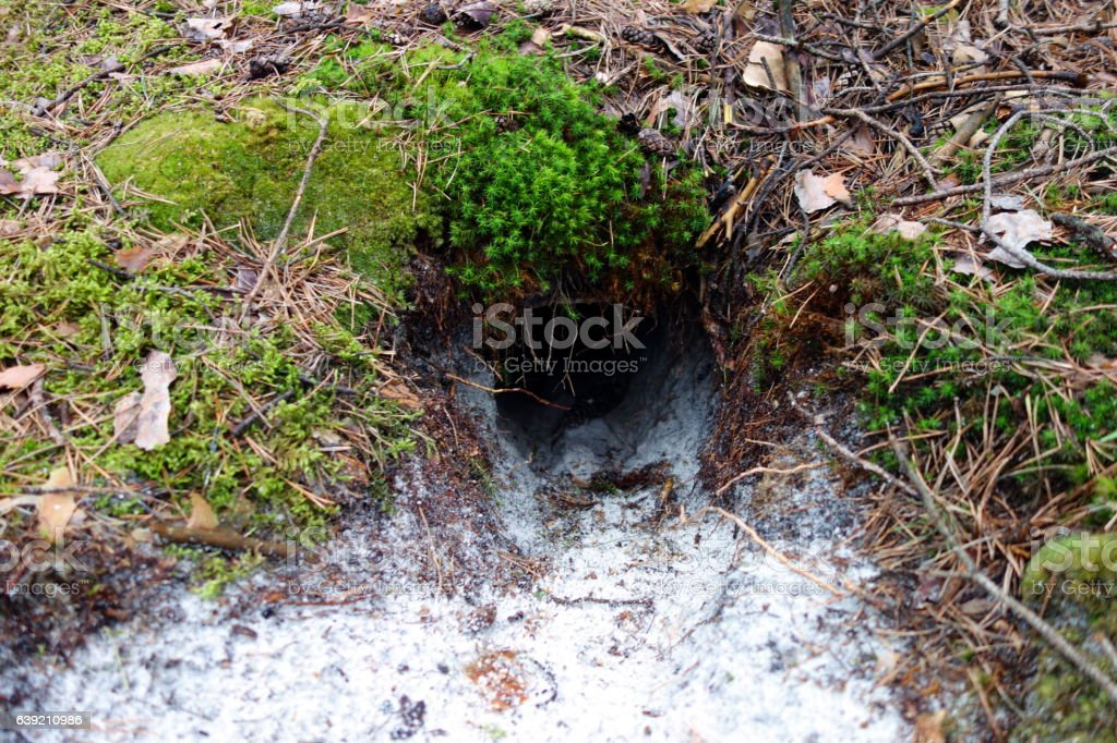 Fox burrow stock photo