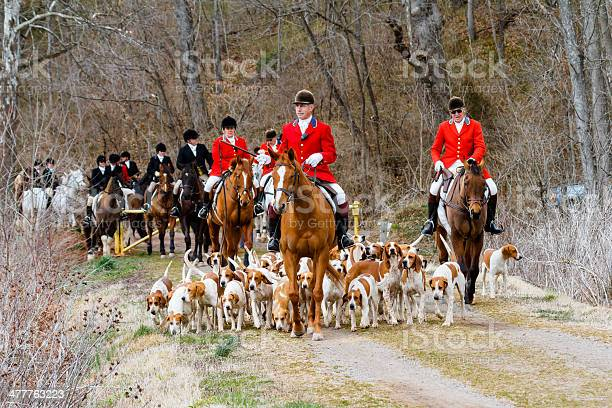 Fox Hunt Hounds Horses And Riders Stock Photo - Download Image Now