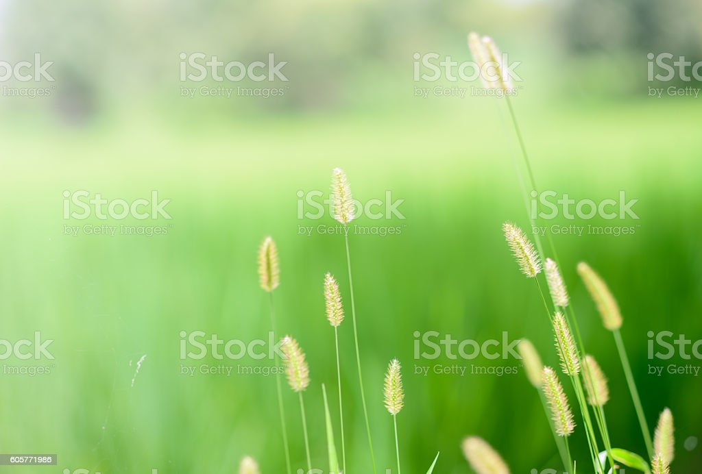 Fox Tail In A Blurred Background Stock Photo - Download Image Now