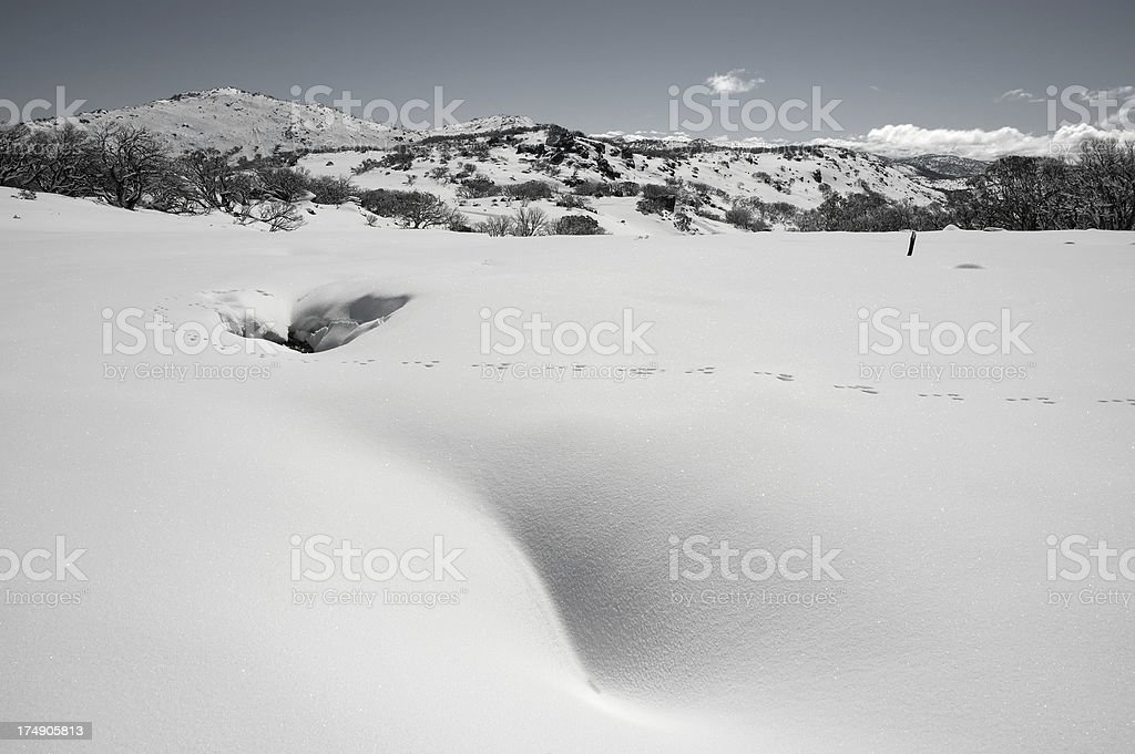 Fox tracks in snow royalty-free stock photo