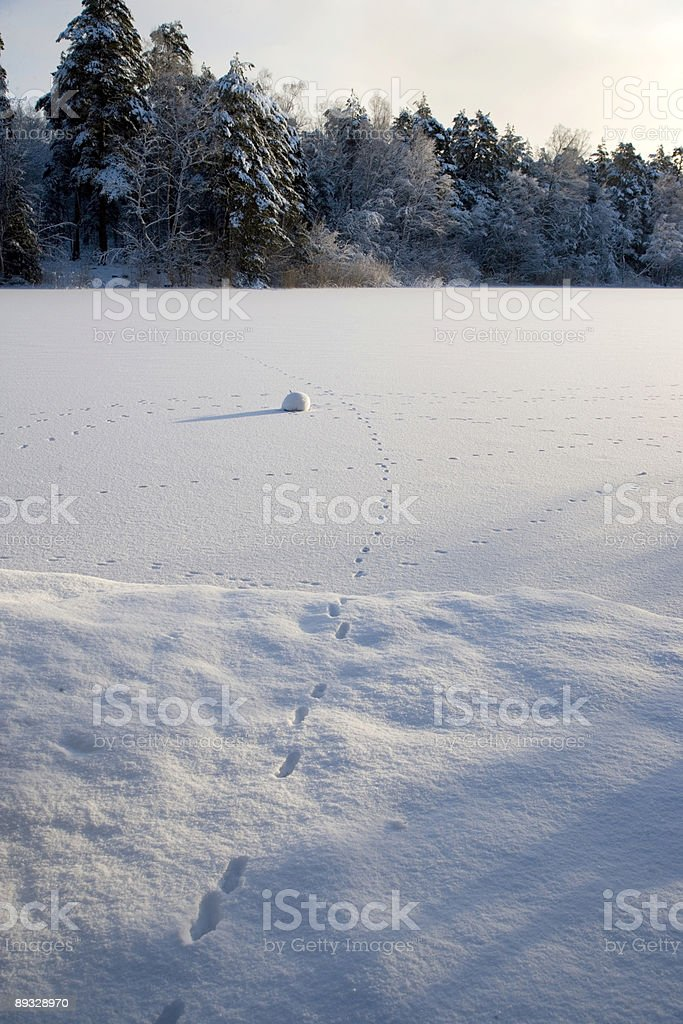 Fox tracks in winter (Sweden) royalty-free stock photo