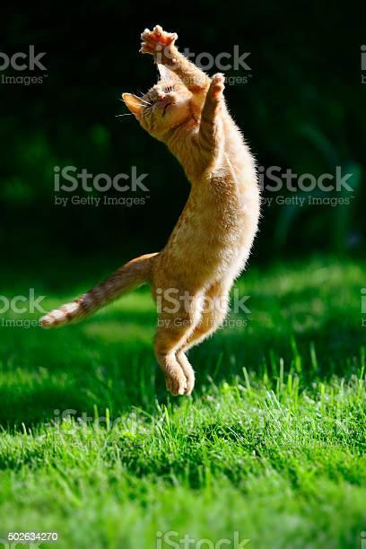 Foxy kitten picture id502634270?b=1&k=6&m=502634270&s=612x612&h=qcvpozdx fmwrqr27w2bubs3bnam9v7en0upaohmm4k=