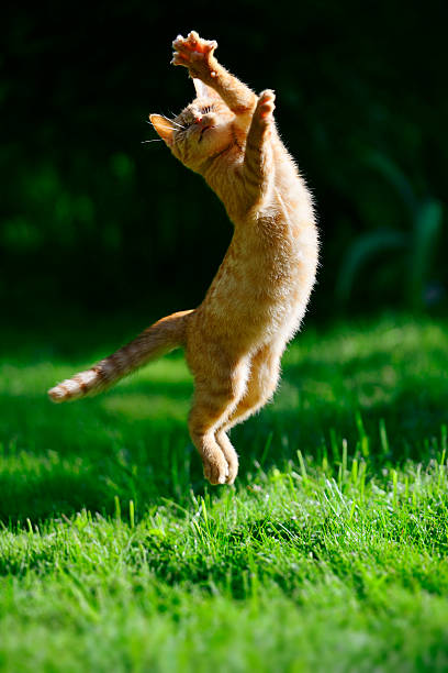 Foxy kitten picture id502634270?b=1&k=6&m=502634270&s=612x612&w=0&h=ixrfz1 almgeg4wtlmqml09h7uyvsbdgqjavo2ftgew=