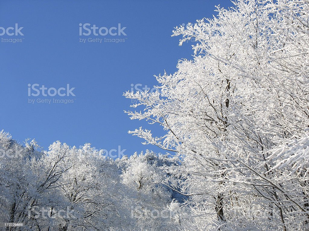Fozen Forest royalty-free stock photo