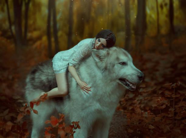 eine fragile mädchen reiten einen wolf, wie prinzessin mononoke. schlafende schönheit. alaskan malamute ist wie ein wilder wolf. der hintergrund ist eine fabelhafte wald in warmen herbstfarben - elfenkostüm damen stock-fotos und bilder
