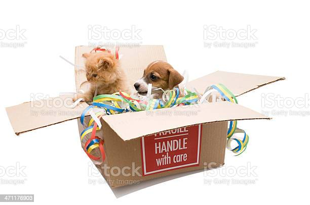 Fragile handle with care picture id471176903?b=1&k=6&m=471176903&s=612x612&h=nwz12y6f45h7ydsyna l80mhp4ouvlty3tawcdk9vmq=