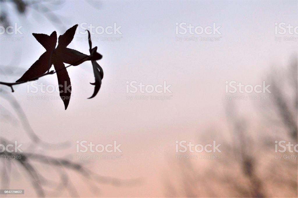 Fragile leaves stock photo