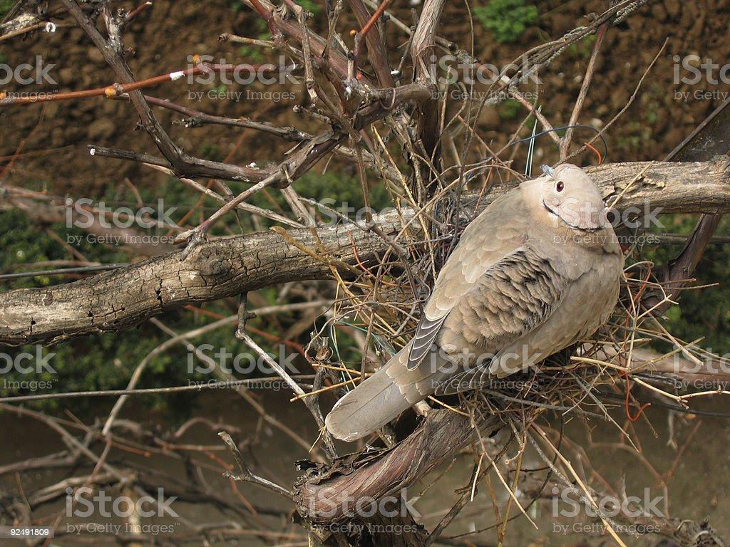 fragile nest royalty-free stock photo