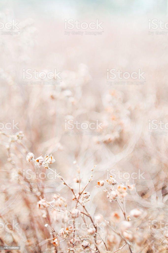 Fragile plants royalty-free stock photo