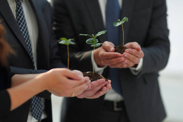 fragile sprouts in the hands of the business team stock photo