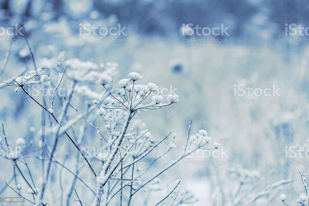 Fragile wild flowers in winter stock photo