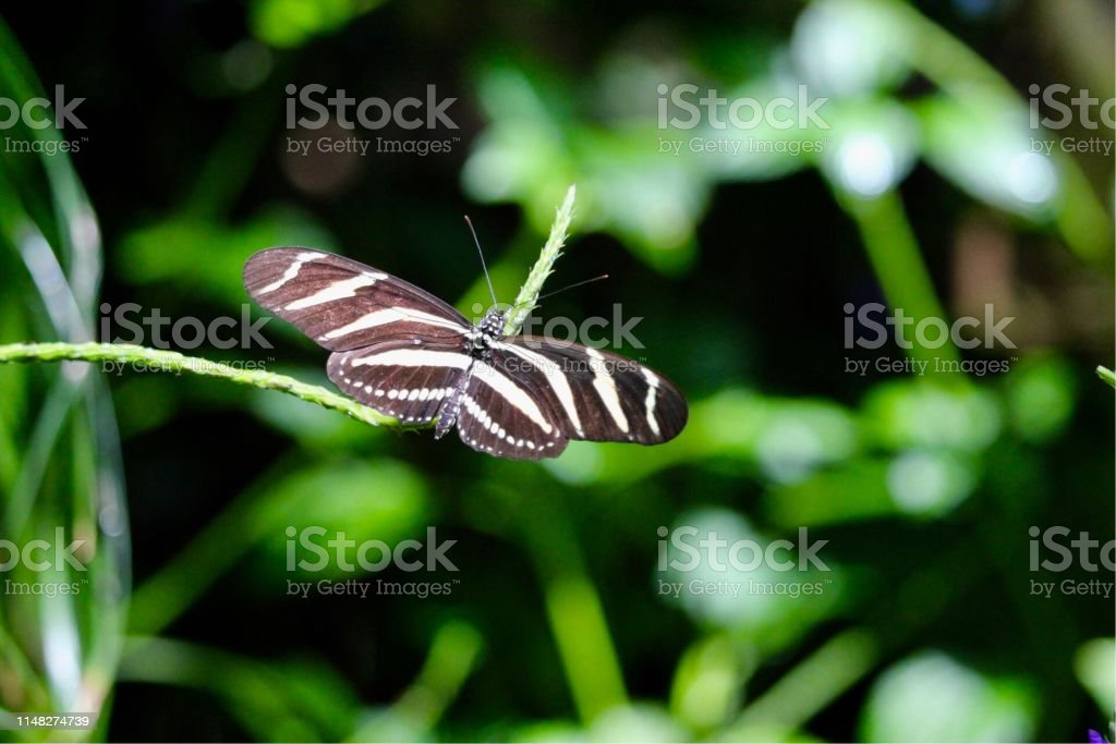 One black and white butterfly on thin branch in garden. Portrait....