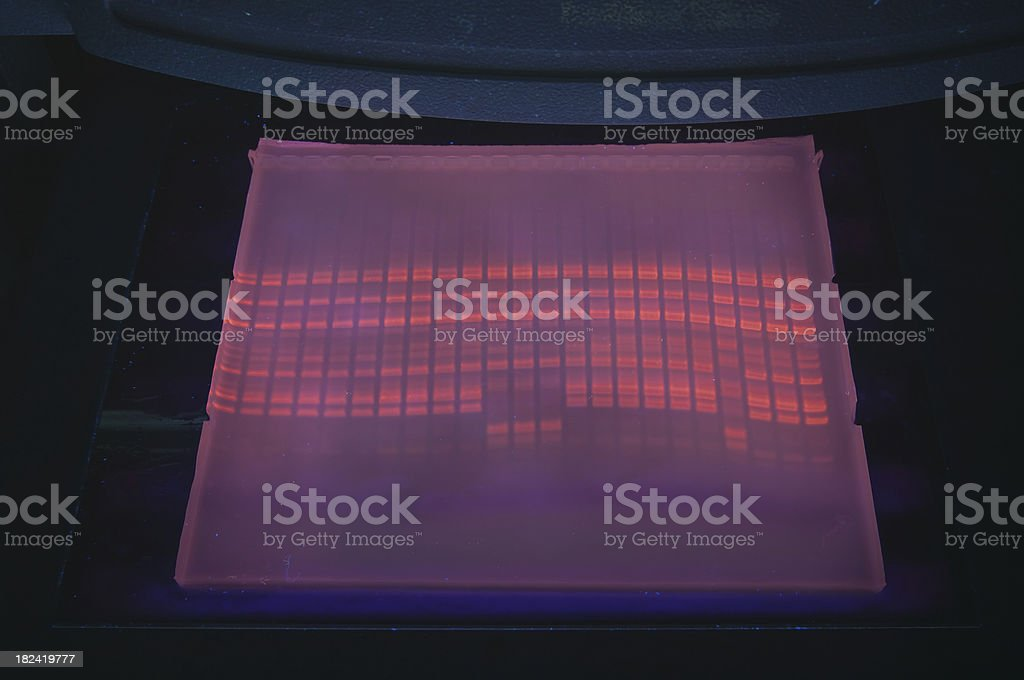 DNA fragment analysis royalty-free stock photo