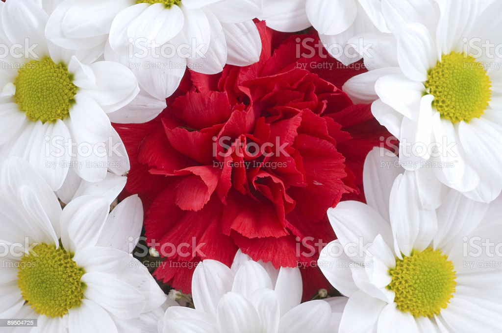 Fragment of a bouquet royalty free stockfoto