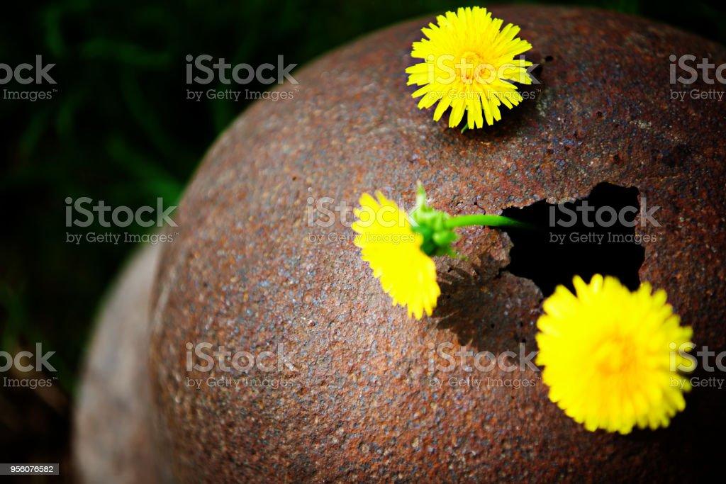 Fragmento de un casco corroído de la segunda guerra mundial con las flores de manzanilla - foto de stock