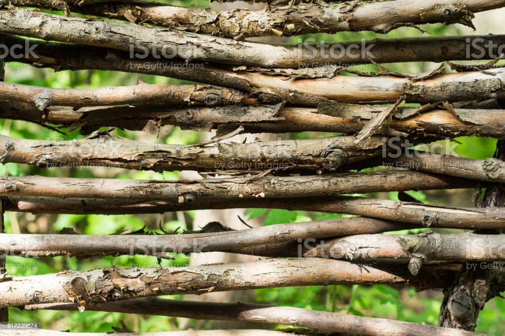 Fragment of a hedge of twisted branches stock photo
