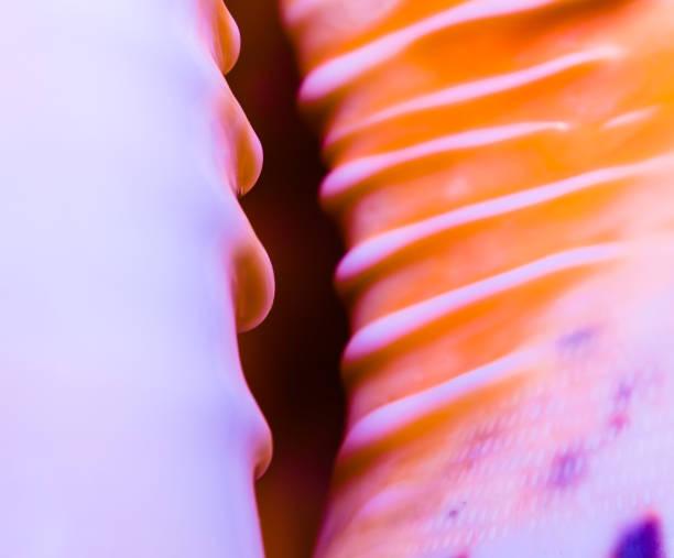 fragment van een grote oceanic seashell abstracte textuur oranje violet met donkere gat macro close-up - pink and orange seashell background stockfoto's en -beelden