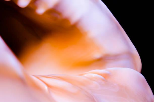 fragment van een grote oceanic seashell abstracte textuur oranje met donker gat - pink and orange seashell background stockfoto's en -beelden