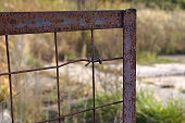 istock fragment of a metal fence on the object 1278736175