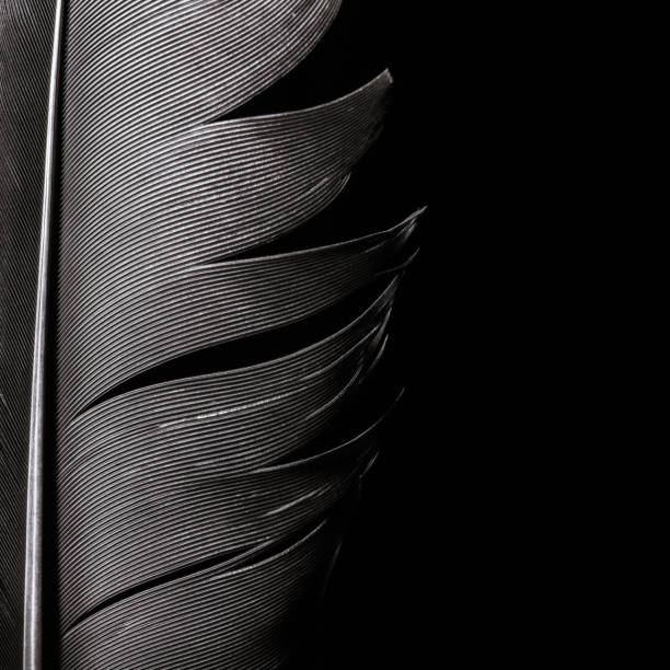 Fragment of birds feather. stock photo
