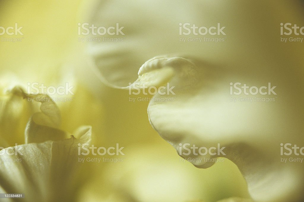 fragment of flower royalty-free stock photo