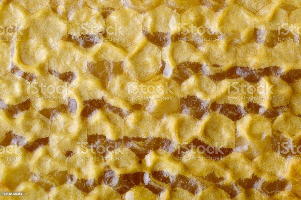 전체 셀 벌집의 단편입니다. 새로 꿀 꿀벌 벌집 밀랍을 당 겼 다. 벌집 배경입니다. - 로열티 프리 0명 스톡 사진