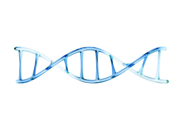 fragment of human dna molecule, 3d illustration isolated on whit - dna foto e immagini stock