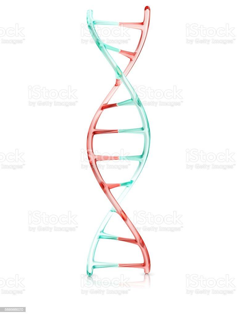 fragment of human DNA molecule, 3d illustration stock photo