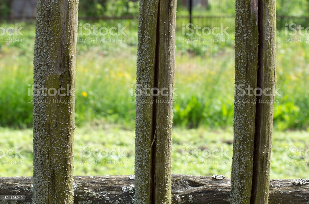 Fragment of moss-covered wooden fences of the three pegs stock photo