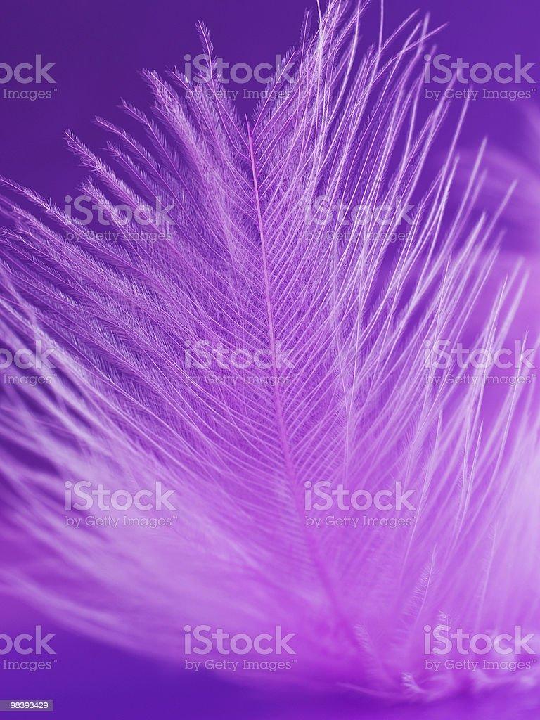 프레그먼트 분홍빛 깃털 있는 violet 배경기술 royalty-free 스톡 사진