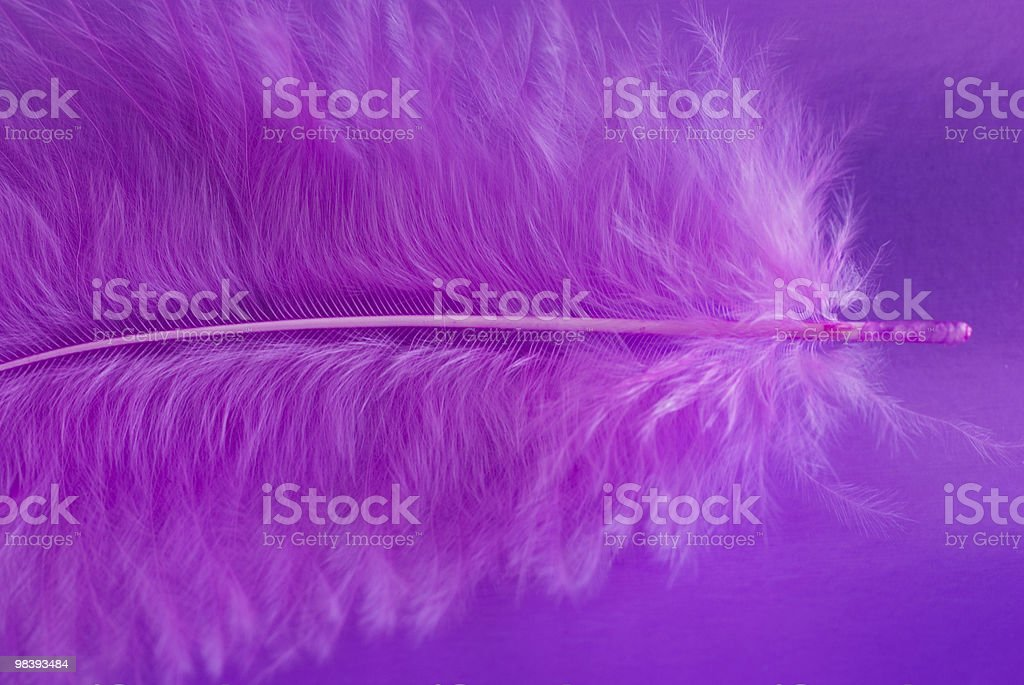 Fragment of pink feather on a violet background royalty-free stock photo