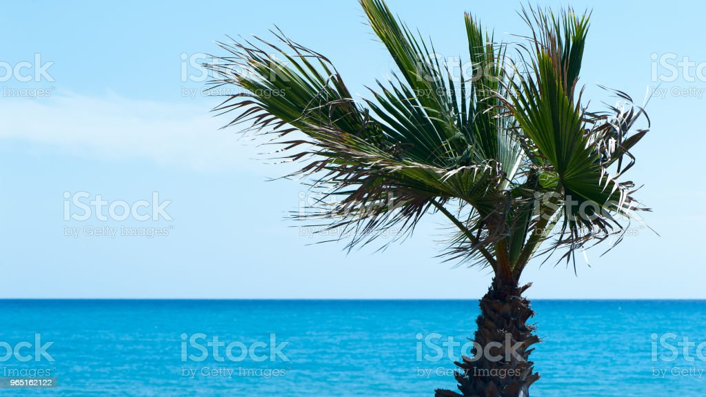Frame, background, palm tree and blue sea, space for text. Theme of vacation, recreation, the sea zbiór zdjęć royalty-free