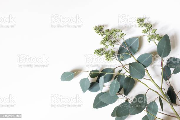 Frame border made of green berry eucalyptus populus leaves tree on picture id1192839153?b=1&k=6&m=1192839153&s=612x612&h=gzbqscezsshn mnytmjr2hjkuu0jrgoqf4sox15tcim=