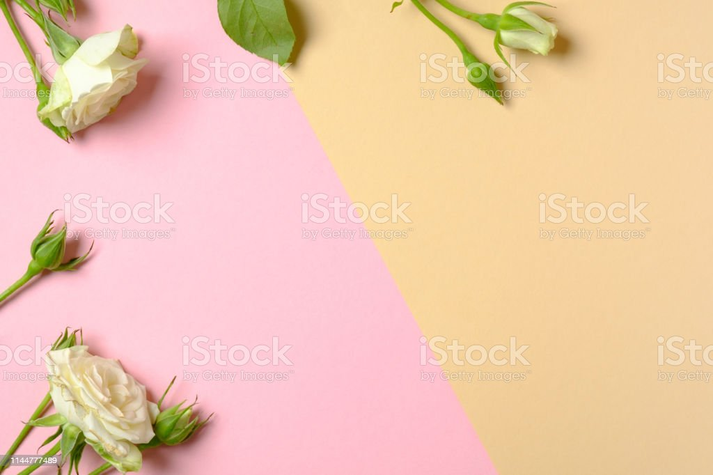 Frame border made of white roses flowers with copy space. Flat lay...