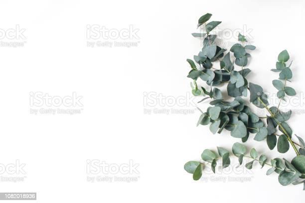 Frame corner made of green eucalyptus leaves and branches on white picture id1082018936?b=1&k=6&m=1082018936&s=612x612&h=pcui7eu4hfrpb4pakq6t4xlqt zfrsjbpu9c60dn0fu=