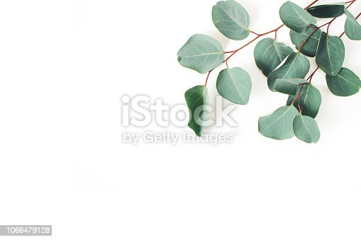 Frame, corner made of green Eucalyptus populus leaves and branches on white background. Floral composition. Feminine styled stock flat lay image, top view, copy space.